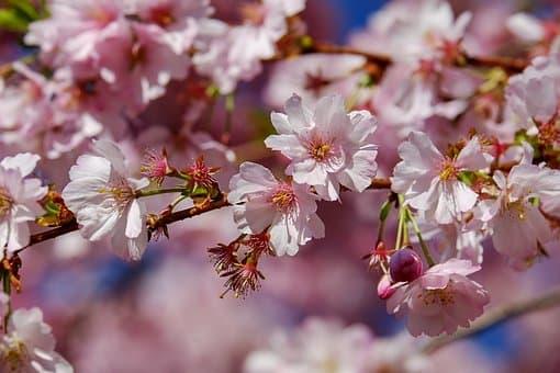 メンズの春コーデはお花見でも手を抜かない